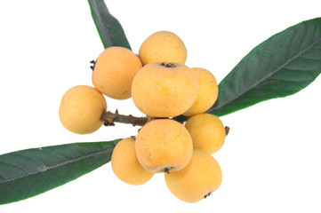 Wall Mural - a bunch of loquat isolated on white background