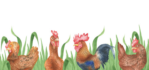 Background of hens