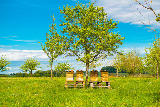 Bee hives standing under a tree