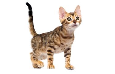 Fototapete - cat hunts on a white background
