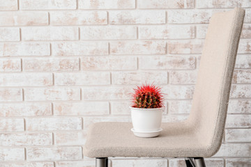 Foto op Textielframe Ezel Cactus on chair near brick wall. Hemorrhoids concept