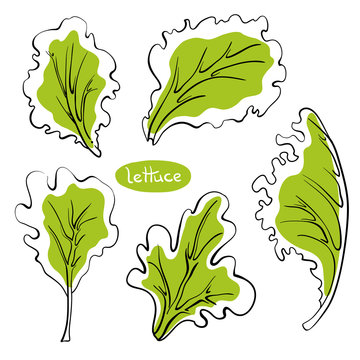 Lettuce leaves. Colorful line sketch collection of vegetables and herbs isolated on white background. Doodle hand drawn vegetable icons. Vector illustration