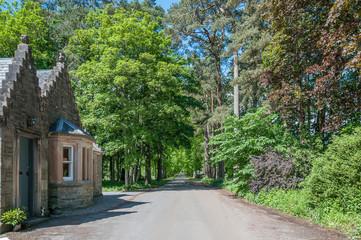 House near an avenue surrounded by green trees, Edinburgh, Scotland
