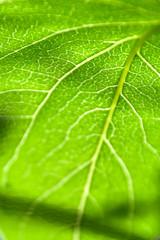 fresh summer green tree leaves