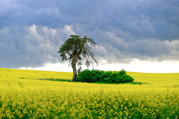 Landscape , Krajobrazy 2020