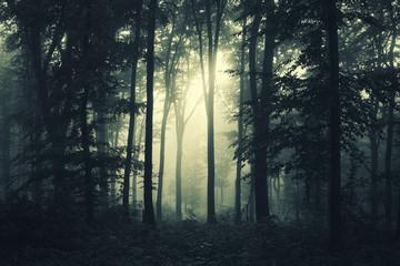 Wall Murals Forest dark woods in fog fantasy landscape
