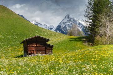 Almhütte mitten in einer Blumenwiese in den Bergen des Zillertal in Tirol Wall mural