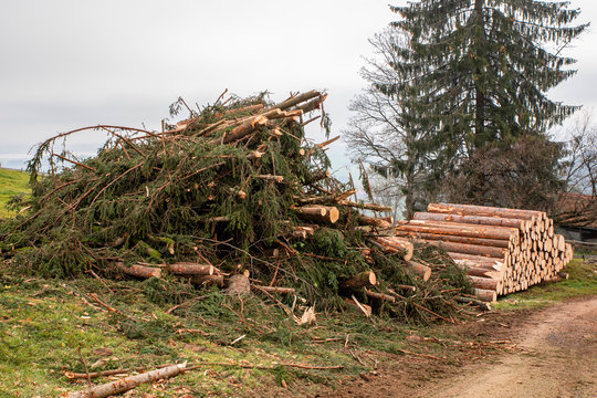 Harvesting timber after a storm