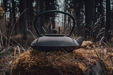 teapot for brewing tea on background of forest