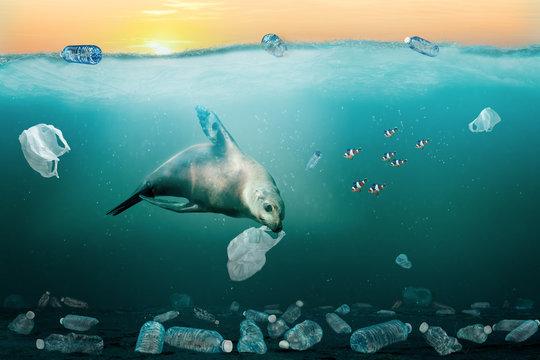 Sea Lion Eating Plastic Bag in Ocean. Environmental Pollution Problem Concept.