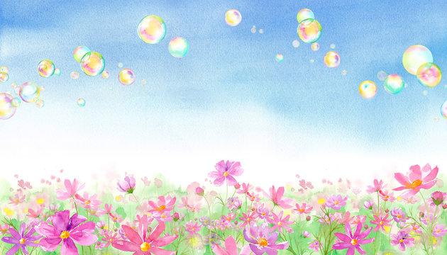 満開のコスモス畑とシャボン玉の風景、水彩イラスト