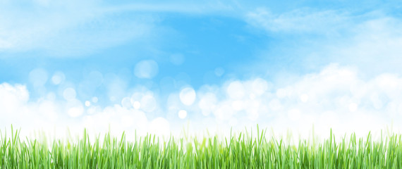 Abstract summer grass field and sky wide backdrop