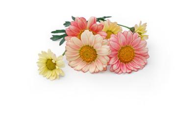 Blumen liegen auf weißem Hintergrund