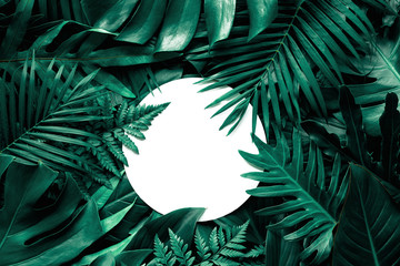 Wall Mural - tropical green leaves and palms  background with white paper card note, nature flat lay concept