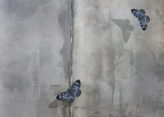 Foto auf Gartenposter Schmetterlinge im Grunge Beautiful blue butterflies on concrete wall background. Free space for text.