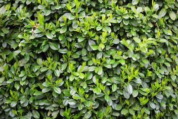 Green Laurels pattern Wall mural