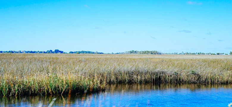 Beautiful Florida swamp winter landscape