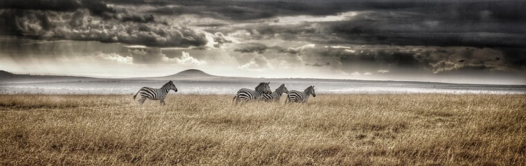 Foto op Plexiglas Zebra Panoramic View Of Zebras On Field Against Cloudy Sky
