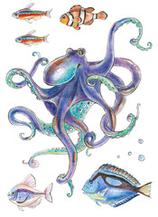 Colored pencil illustration - octopus and tropical fish