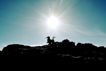 Low Angle View Of Two Birds On Rocky Land Against Clear Sky Fototapete