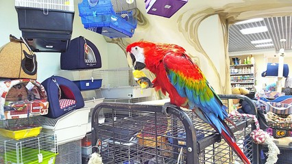 the pet store nature bird parrot macaw Fototapete