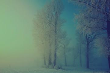 Foto auf Gartenposter Olivgrun View Of Trees On Snow Covered Landscape