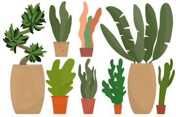 Indoor plants in ceramic pots to decorate the interior of the house, on the balcony. Set for botanical design. Vector in a flat style. Isolated on white. Exotic and traditional indoor flowers.