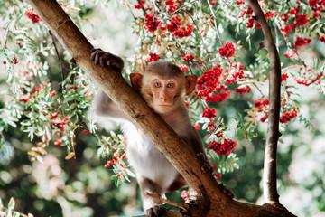 Photo sur Aluminium Singe Cute little monkey sits on the tree