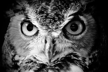 Canvas Prints Hand drawn Sketch of animals Close-up Portrait Of Owl