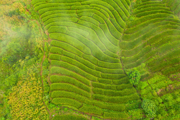 Foto auf AluDibond Reisfelder Aerial view of the green terraced rice fields landscape different pattern at morning in the northern thailand