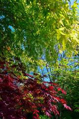 background of red and green leaves high contrast