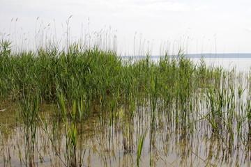 Seengraslandschaft