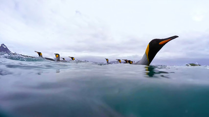 penguin in the wild nature water Fotomurales