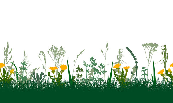 Seamless pattern of spring grassland (dandelions, plants and other weeds), isolated. Vector illustration