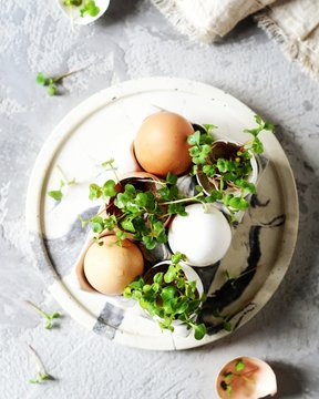 Eggshell greens on a gray background. Spring, easter. Healthy eating, micro greens