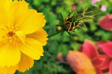 Flowers in the garden. Fotomurales