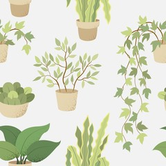 Veclor seamless pattern with house indoor plants on white background