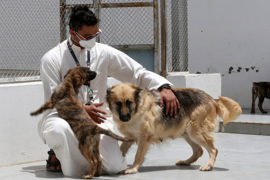 A volunteer at the shelter's administration plays with dogs at Riyadh's animal shelter, dedicated to caring for animals amid fear that cats and dogs might contract or transmit the coronavirus disease (COVID-19), Riyadh
