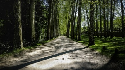 Wall Murals Road in forest Beautiful shot of a road passing through the woods in Palace of Versailles' Gardens
