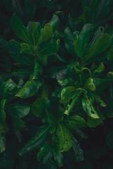 Tropikalne rośliny, zbliżenie ładne naturalne ciemne tło.