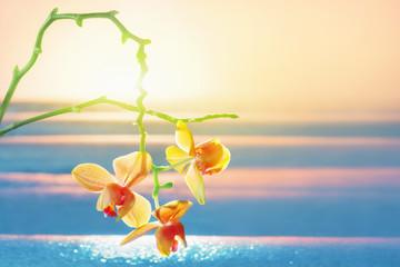 Foto auf AluDibond Orchideen Orchidee mit Sonnenlicht am Meer