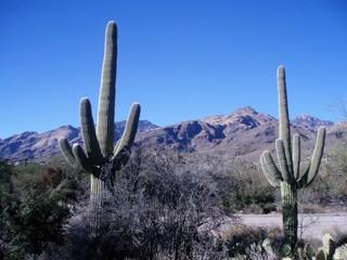 Door stickers Cactus Cactus Plant Against Clear Sky