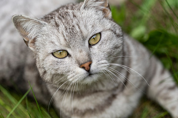 Portrait of tabby cat outdoors.
