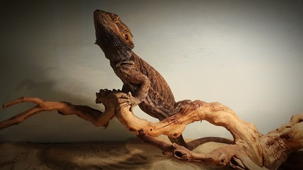 Close-up Of Iguana On Tree Trunk Wall mural