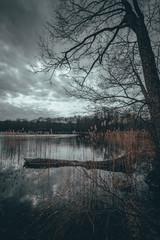 Fototapeta Zatopiona kłoda nad brzegiem jeziora Hańcza w pochmurny dzień obraz