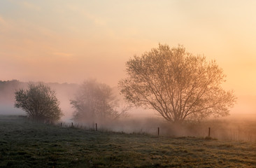 Wall Mural - beautiful misty sunrise over trees by river