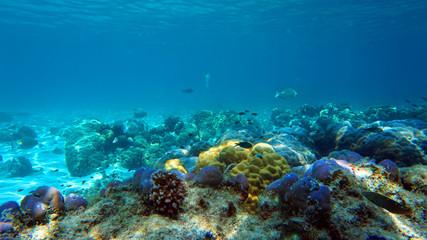 Fotobehang Koraalriffen coral reef and fish underwater, scuba diving