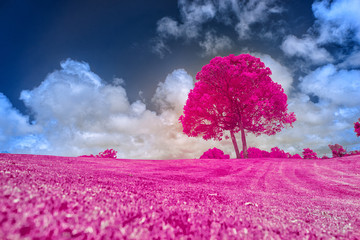 pink tree in the field
