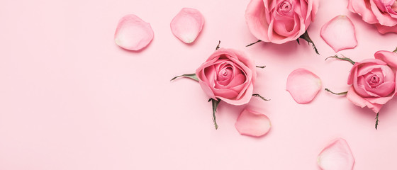 Floral monochrome composition of rose buds and petals on pink banner, copy space