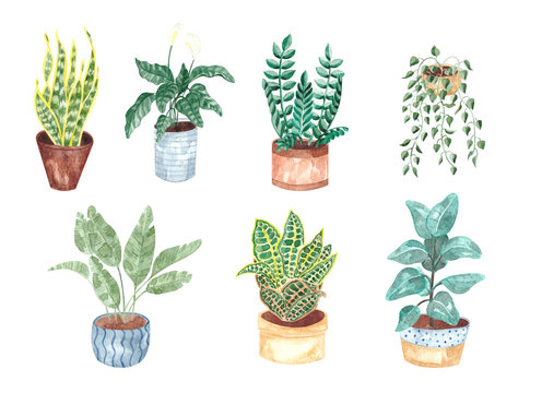 Watercolor hand-painted, green plants in flower pots. A set of flower elements isolated on a white background. The collection of indoor plants is ideal for printing, poster, postcard making and interi